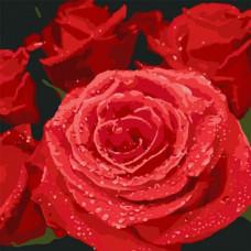 Картина по номерам Идейка Красные розы 40х40 (КНО3089)